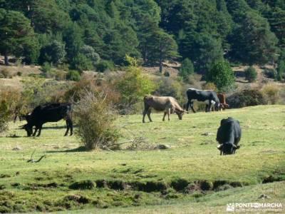 Azud y nacimiento Acueducto de Segovia; sightseeing montaña consejos senderismo para principiantes